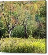 Fallow Meadow Canvas Print