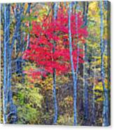 Fall's Flame Canvas Print