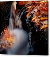 Falls Foliage Canvas Print