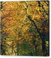 Falls Gold Canvas Print
