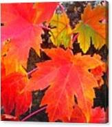 Falltime ...  Canvas Print