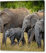 Family Of Elephants Canvas Print