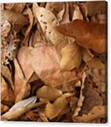 Family Of Leaves Canvas Print