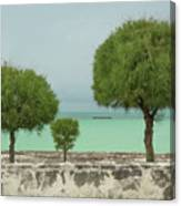 Family Of Trees. Canvas Print