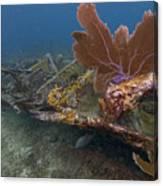 Fan Coral On Elbow Reef In Key Largo Canvas Print