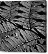 Fan Of Fronds Canvas Print