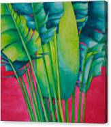 Fan Palm With Pink Canvas Print