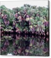 Fan Palms Canvas Print