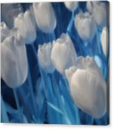 Fanciful Tulips In Blue Canvas Print