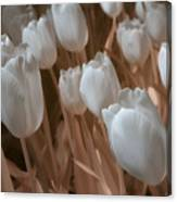 Fanciful Tulips In Peach Canvas Print