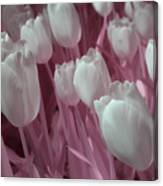 Fanciful Tulips In Pink Canvas Print