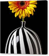 Fancy Daisy In Stripped Vase  Canvas Print