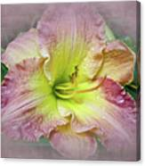 Fancy Daylily In Pink And Yellow Canvas Print