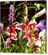 Fancy Lilies In Garden Canvas Print