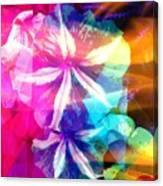 Fancy Pansy Candy Canvas Print
