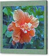 Fancy Peach Hibiscus Canvas Print