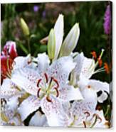 Fancy White Lily In Garden Canvas Print
