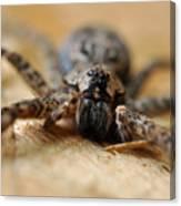 Spider Close Up Canvas Print
