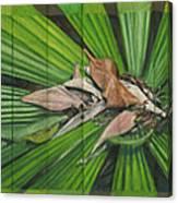 Fantail Palm Plateau Canvas Print