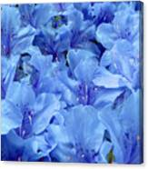 Fantasia Azalea Canvas Print
