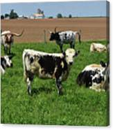Fantastic Farm On A Spring Day With Cows Canvas Print