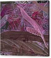 Fantasy African Violets And Peace Lily Pink, Red And Pink Canvas Print