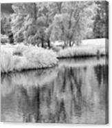 Fantasy Tree Reflection Canvas Print