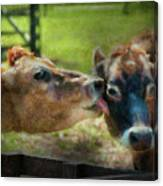 Farm - Cow - Let Mommy Clean That Canvas Print