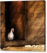 Farm - Duck - Welcome To My Home  Canvas Print