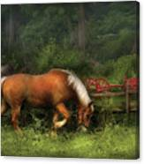 Farm - Horse - In The Meadow Canvas Print