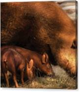 Farm - Pig - Family Bonds Canvas Print