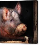 Farm - Pig - Piggy Number Two Canvas Print
