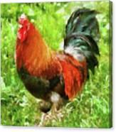 Farm - Chicken - The Rooster Canvas Print