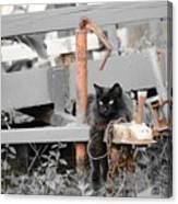 Farm Kitty Hanging Out Canvas Print