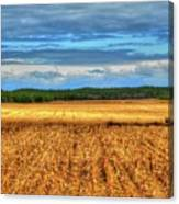Golden Field Farm Li.ny Canvas Print