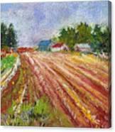 Farm Rows Canvas Print