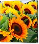 Farm Stand Sunflowers #8 Canvas Print