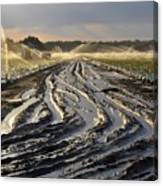 Farming Strawberries Canvas Print