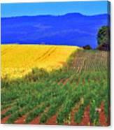 Farmlands Of The Willamette Valley Canvas Print
