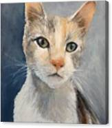 Farmyard Cat Canvas Print