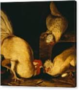 Farmyard Fowls Canvas Print