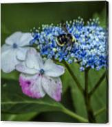 Fast Food For Bumblebees Canvas Print