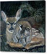 Fawn And Cat Canvas Print