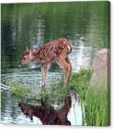 Fawn At The Water Hole Canvas Print