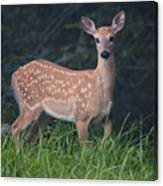 Fawn Doe Canvas Print