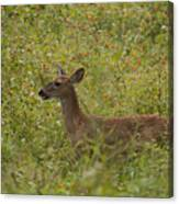 Fawn In A Field Of Flowers Canvas Print