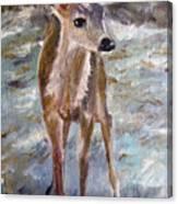 Fawn Canvas Print