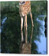 Fawn Reflection Canvas Print