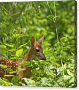 Fawn Relaxing Canvas Print