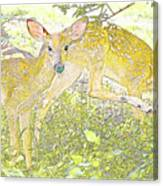 Fawn Twins Digital Painting Canvas Print